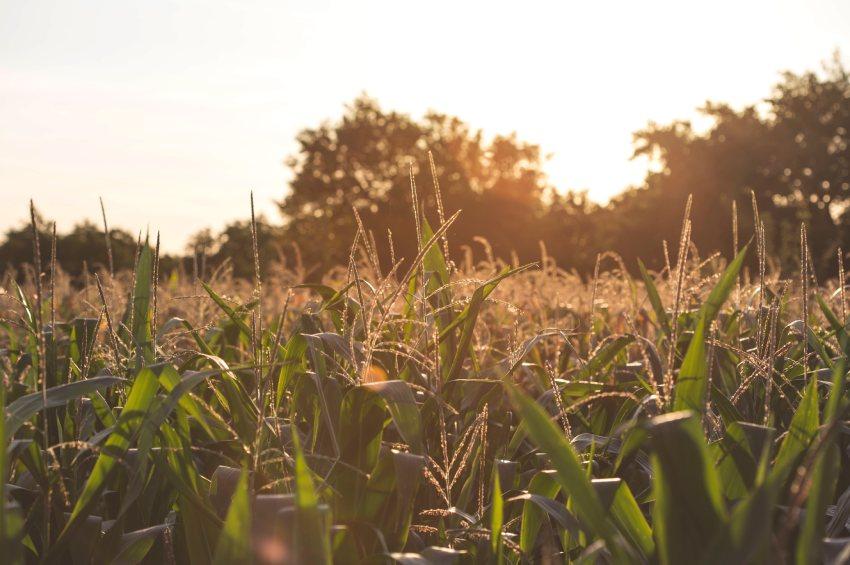 Globalny system żywnościowy – jedno z największych wyzwań współczesnego świata!